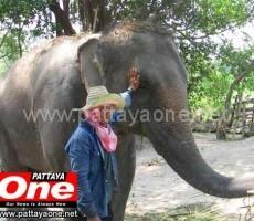 elephant-1-230x200